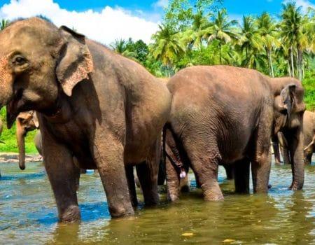 Immigrating to Sri Lanka, Citizenship for Sri Lanka, Immigrating to Sri Lanka, Emigrating to Sri Lanka, Visas Sri Lanka, Residency in Sri Lanka, move abroad to Sri Lanka, living abroad in Sri Lanka, expat in Sri Lanka,