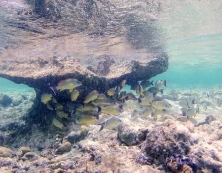 Fish underwater at Cocos Islands