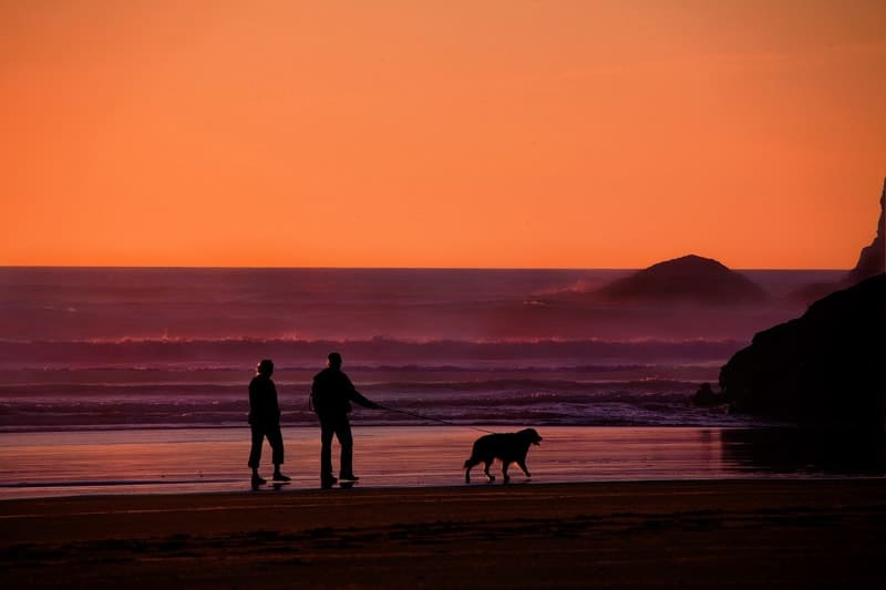 A retired couple abroad on the beach with their dog