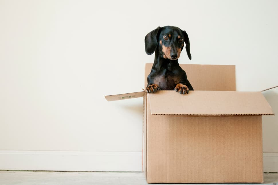 It is essential to trust your international movers with your prized possessions.