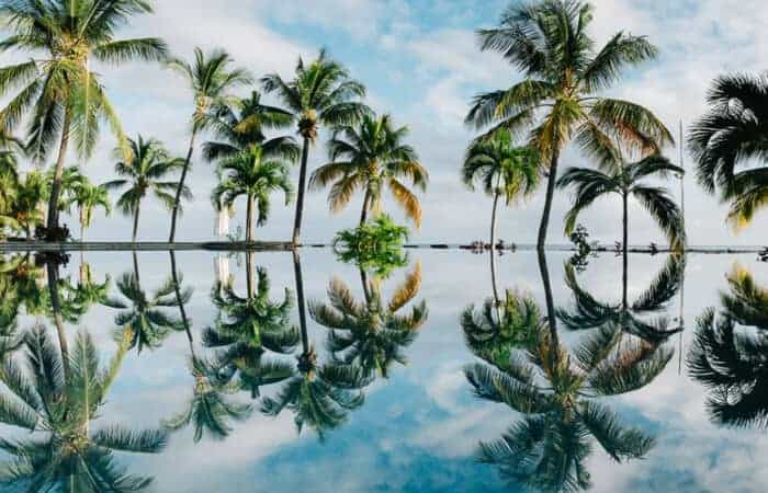 Beautiful palm trees against the water in Mauritius where you can get a visa to live.