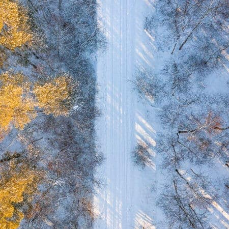 An overhead view of a forest in Estonia